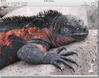 Xee Screenshot mit Meerechse (Galapagos)